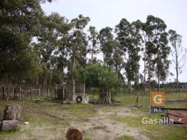 Campo Agricola - Ganadero - Forestal en Ruta 9
