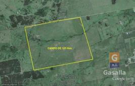 Campo Ganadero en Paraje km 110 (Pan de Azúcar)