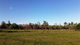 Campo Ganadero en San Carlos