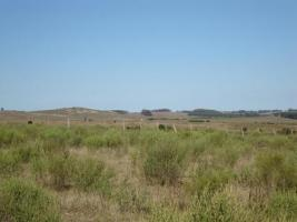 Fracciones de Campos en Ruta 9, San Carlos (Ruta 9)
