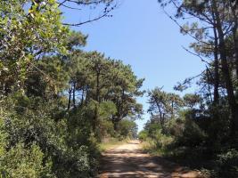 Terreno en Piriápolis (Punta Colorada)
