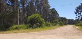 Terreno en Punta del Este (Chihuahua)